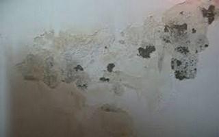 tường bị ẩm mốc